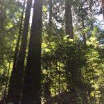 Trees in Lady Bird Johnson Grove